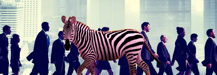 Pinkzebra in the city